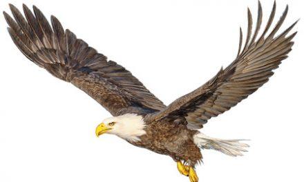 """""""Los pájaros y los buenos resultados en Golf"""" por CTR FGRM"""